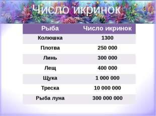 Число икринок Рыба Число икринок Колюшка 1300 Плотва 250 000 Линь 300 000 Лещ