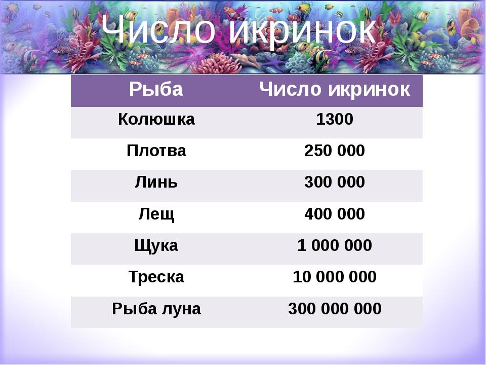 Число икринок Рыба Число икринок Колюшка 1300 Плотва 250 000 Линь 300 000 Лещ...