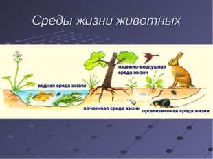 Среды жизни животных