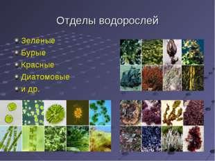 Отделы водорослей Зелёные Бурые Красные Диатомовые и др.