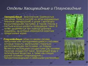 Отделы Хвощевидные и Плауновидные Хвощевидные - многолетние травянистые расте