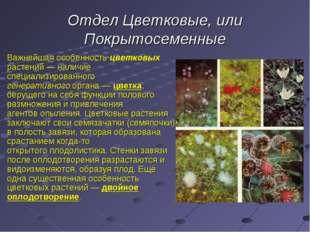 Отдел Цветковые, или Покрытосеменные Важнейшая особенность цветковых растений