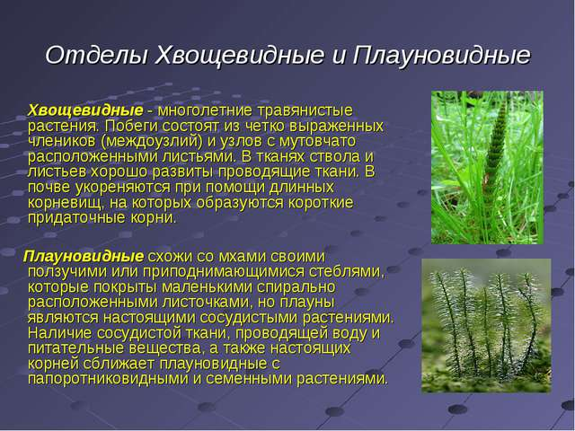 Отделы Хвощевидные и Плауновидные Хвощевидные - многолетние травянистые расте...
