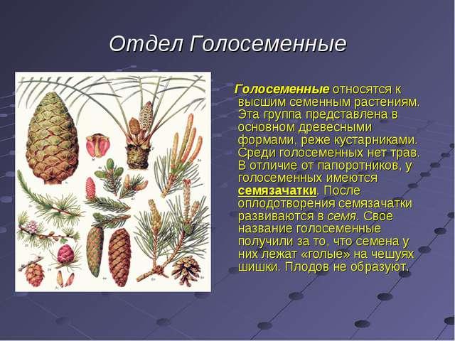 Отдел Голосеменные Голосеменные относятся к высшим семенным растениям. Эта гр...