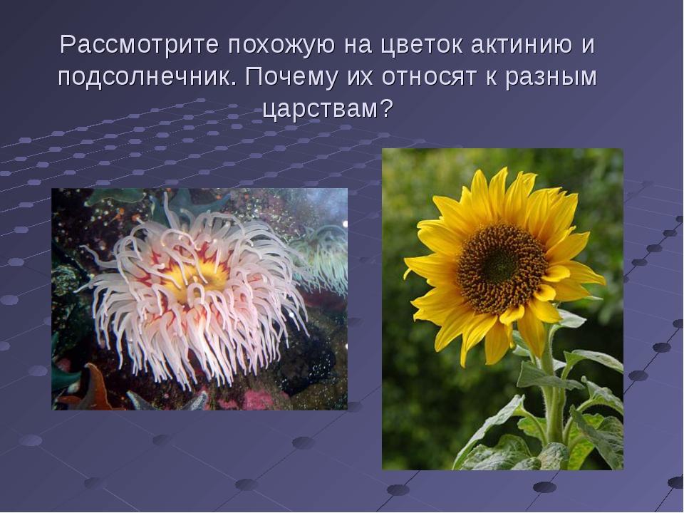 Рассмотрите похожую на цветок актинию и подсолнечник. Почему их относят к раз...