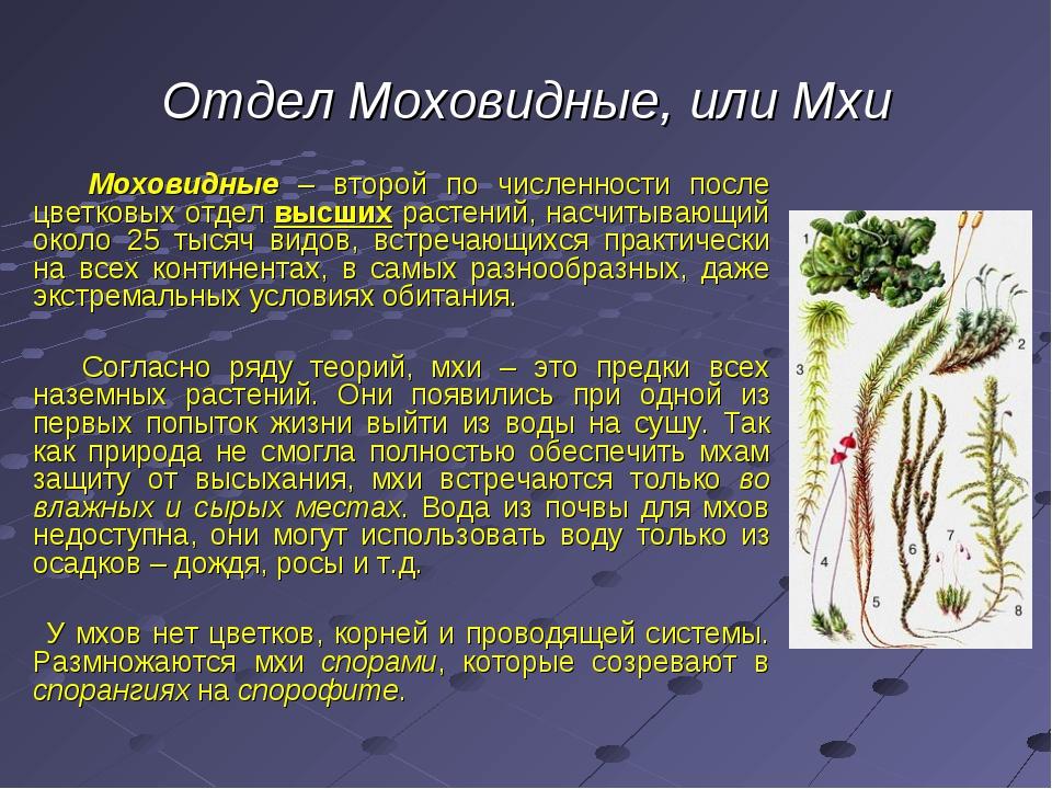 Отдел Моховидные, или Мхи Моховидные – второй по численности после цветковых...