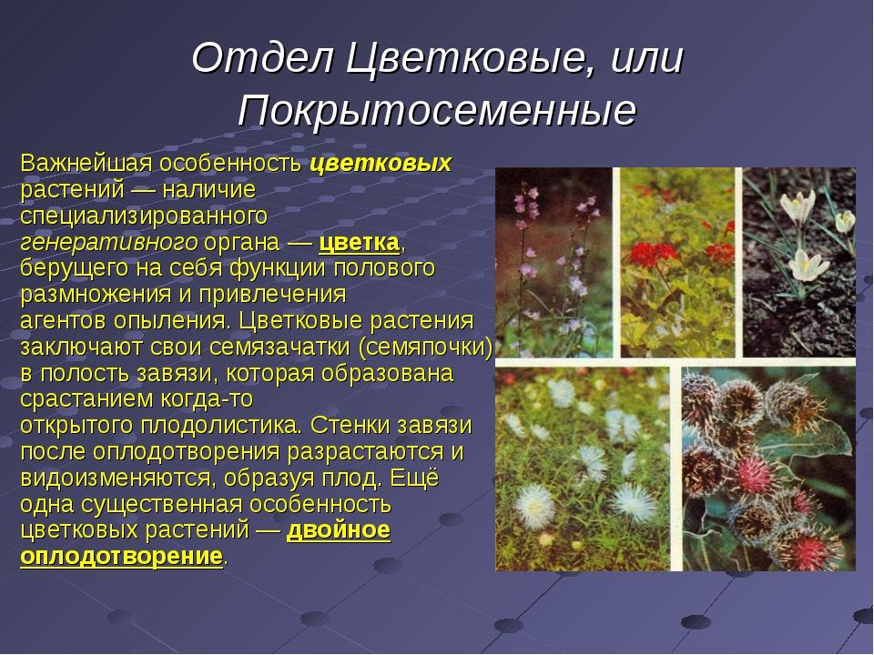 Отдел Цветковые, или Покрытосеменные Важнейшая особенность цветковых растений...