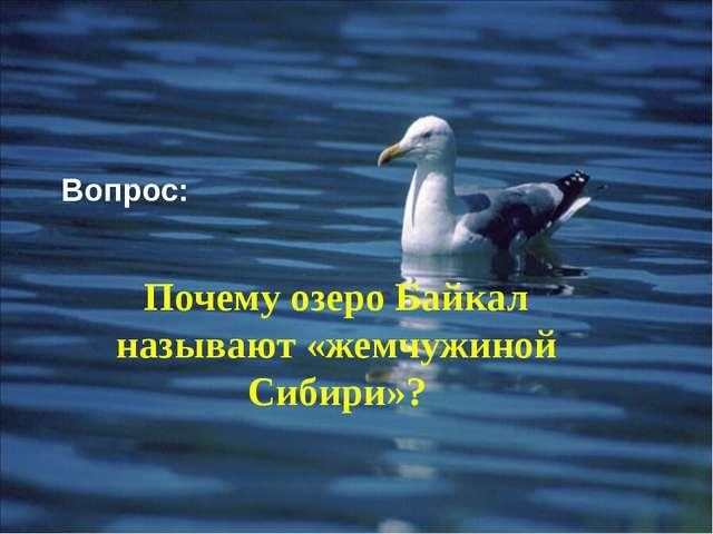 Вопрос: Почему озеро Байкал называют «жемчужиной Сибири»?