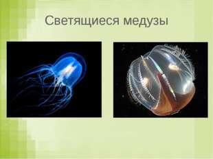 Светящиеся медузы