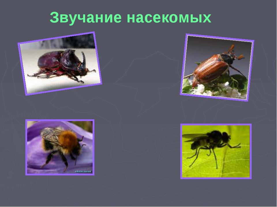 Звучание насекомых