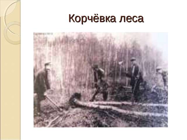 Корчёвка леса