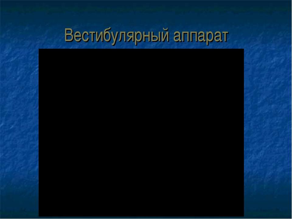 Вестибулярный аппарат aleksei.bazhenov@mail.ru aleksei.bazhenov@mail.ru