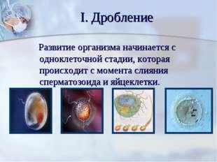 I. Дробление Развитие организма начинается с одноклеточной стадии, которая пр