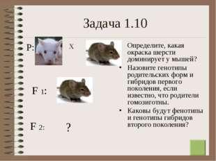 * Задача 1.10 Определите, какая окраска шерсти доминирует у мышей? Назовите г