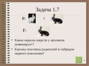 * Задача 1.7 Какая окраска шерсти у кроликов доминирует? Каковы генотипы роди