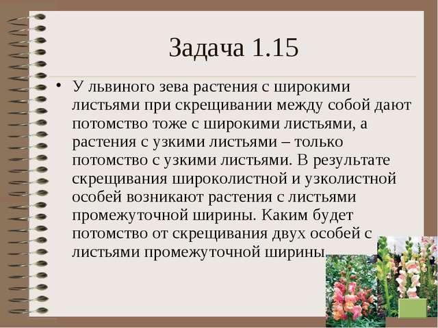 * Задача 1.15 У львиного зева растения с широкими листьями при скрещивании ме...