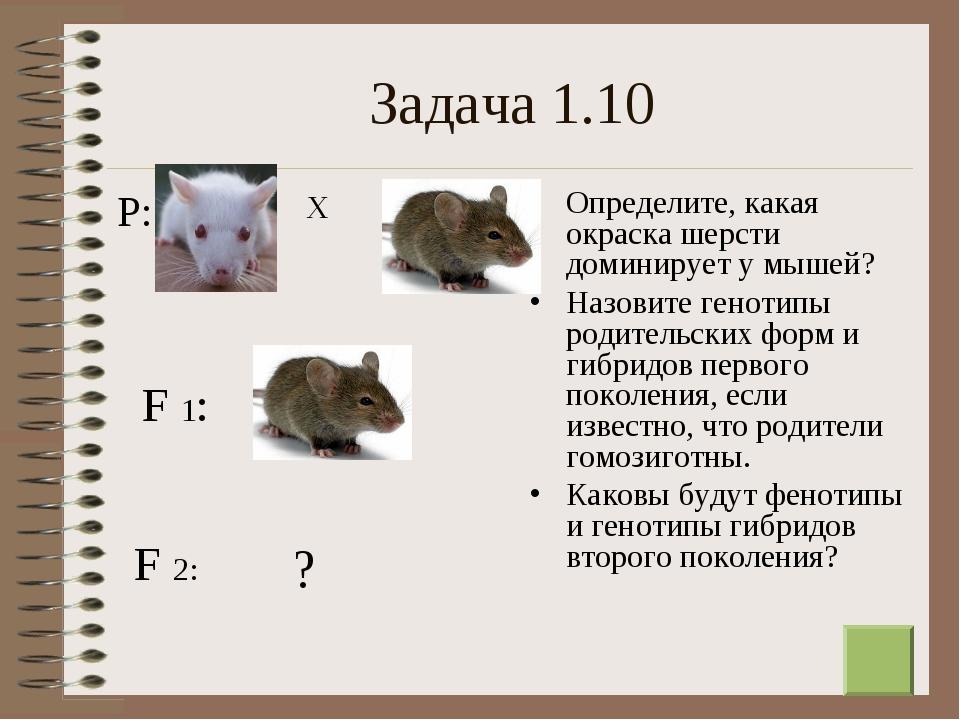 * Задача 1.10 Определите, какая окраска шерсти доминирует у мышей? Назовите г...