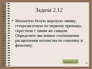 * Задача 2.12 Мохнатую белую морскую свинку, гетерозиготную по первому призна