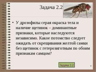 * Задача 2.2 У дрозофилы серая окраска тела и наличие щетинок – доминантные п