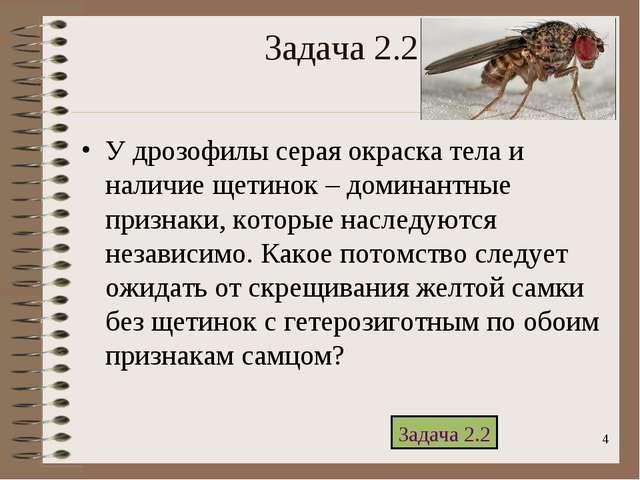 * Задача 2.2 У дрозофилы серая окраска тела и наличие щетинок – доминантные п...
