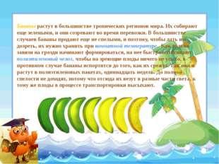 Бананы растут в большинстве тропических регионов мира. Их собирают еще зелены