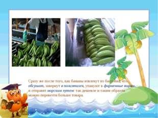 Сразу же после того, как бананы извлекут из бассейна, его обсушат, завернут в