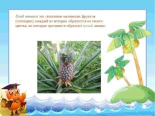 Плод ананаса это скопление маленьких фруктов (соплодие), каждый из которых об