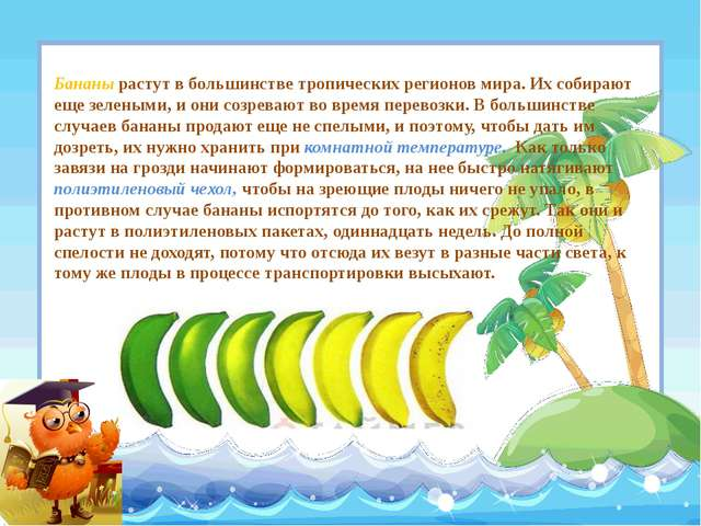 Бананы растут в большинстве тропических регионов мира. Их собирают еще зелены...