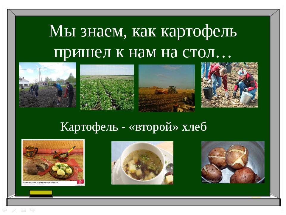 Мы знаем, как картофель пришел к нам на стол… Картофель - «второй» хлеб