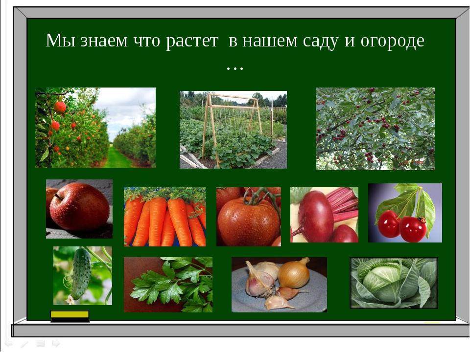 Мы знаем что растет в нашем саду и огороде …