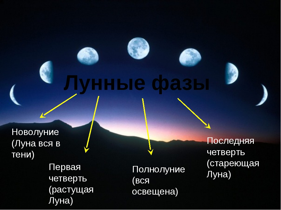 Лунные фазы Новолуние (Луна вся в тени) Первая четверть (растущая Луна) Полно...