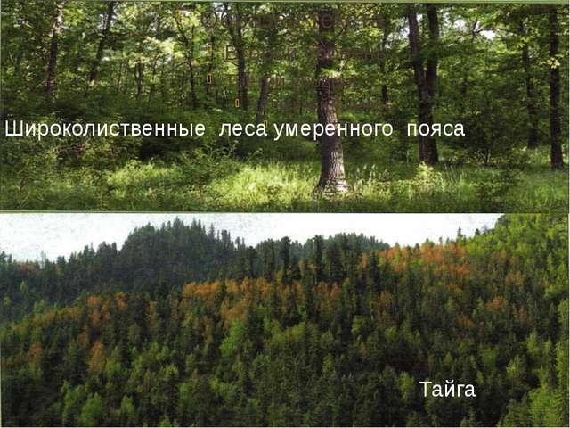 Широколиственные леса умеренного пояса Тайга