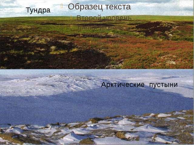 Тундра Арктические пустыни
