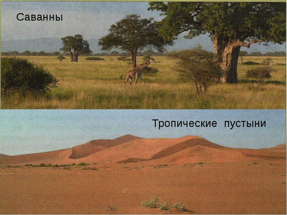 Саванны Тропические пустыни