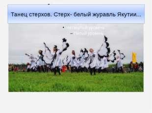 Танец стерхов. Стерх- белый журавль Якутии...