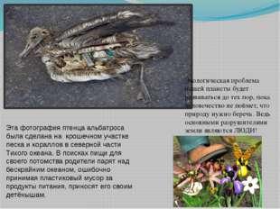 Эта фотография птенца альбатроса была сделана на крошечном участке песка и ко