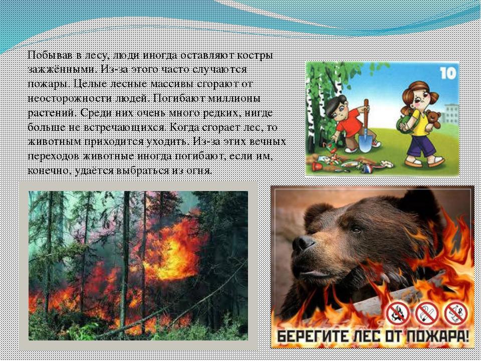 Побывав в лесу, люди иногда оставляют костры зажжёнными. Из-за этого часто сл...