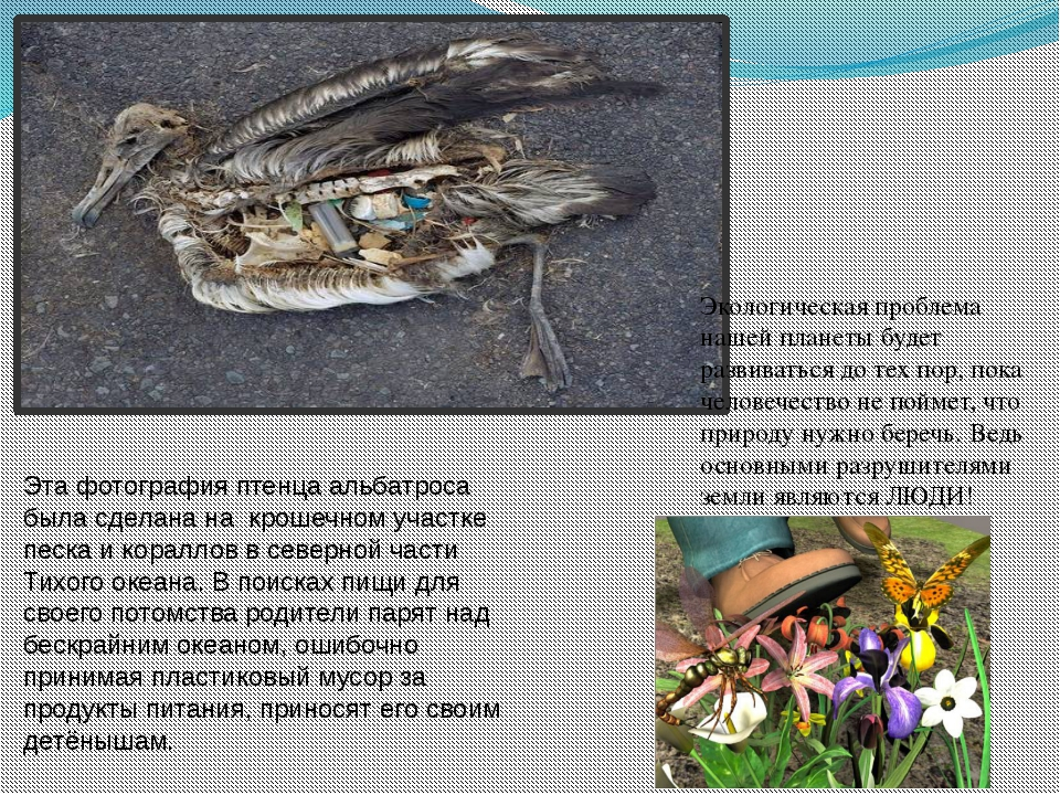Эта фотография птенца альбатроса была сделана на крошечном участке песка и ко...