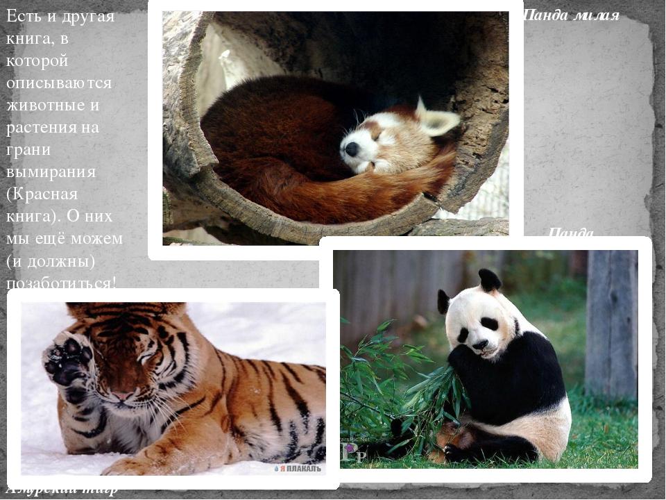 Есть и другая книга, в которой описываются животные и растения на грани вымир...
