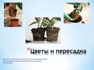 http://elhow.ru/domashnee-hozjajstvo/uhod-za-rastenijami/komnatnye-rastenija/