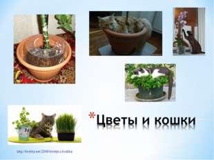 http://kvetky.net/2009/tsvetyi-i-koshka/