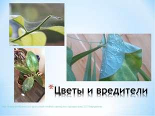 http://forum.bestflowers.ru/t/spravochnik-vrediteli-rastenij-foto-opisanie-
