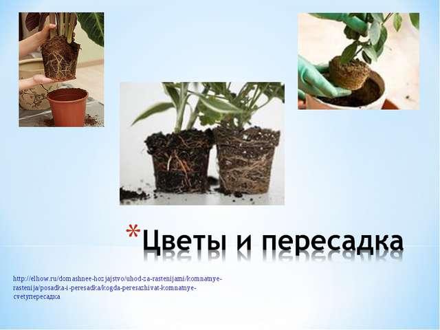 http://elhow.ru/domashnee-hozjajstvo/uhod-za-rastenijami/komnatnye-rastenija/...