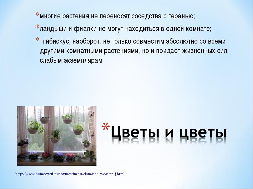 многие растения не переносят соседства с геранью; ландыши и фиалки не могут н...