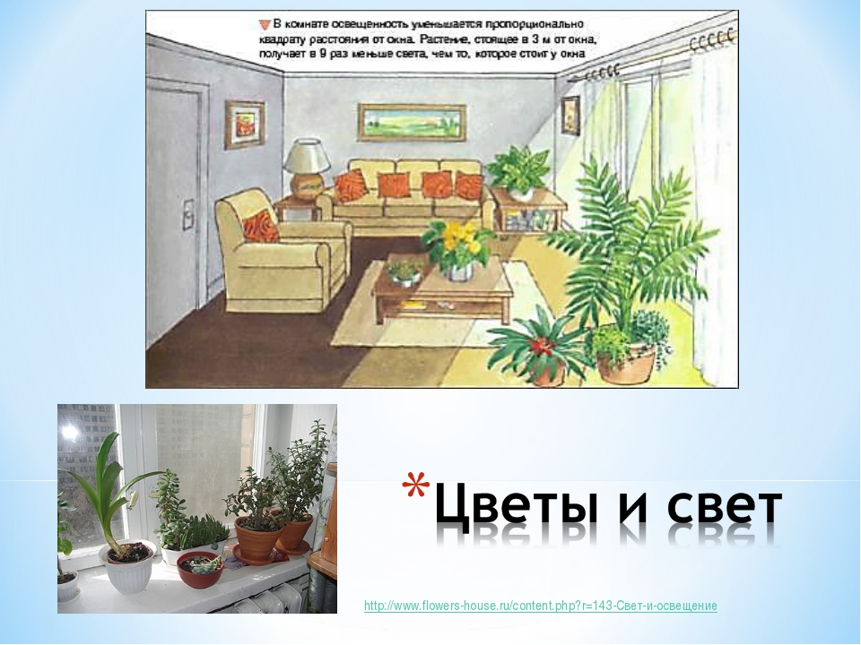 http://www.flowers-house.ru/content.php?r=143-Свет-и-освещение
