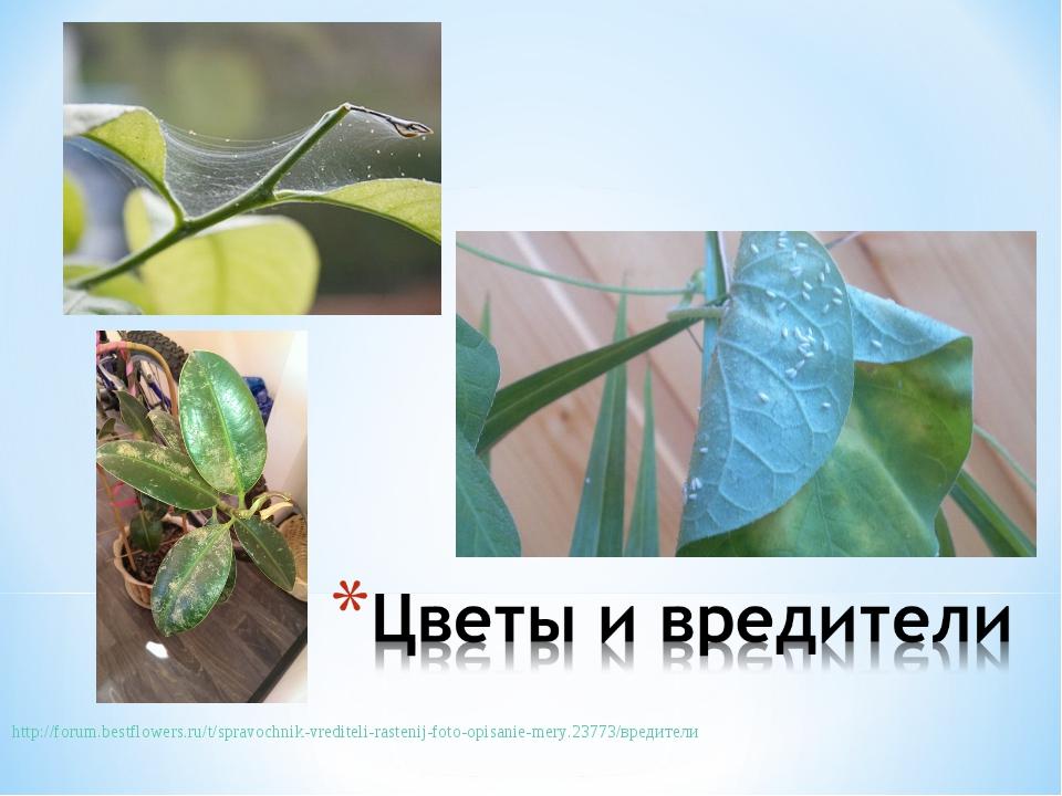 http://forum.bestflowers.ru/t/spravochnik-vrediteli-rastenij-foto-opisanie-...