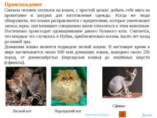 Происхождение Сначала человек охотился на кошек, с простой целью: добыть себе