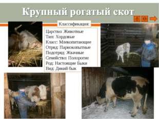 Царство: Животные Тип: Хордовые Класс: Млекопитающие Отряд: Парнокопытные Под