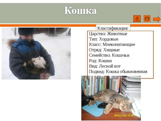 Классификация: Царство: Животные Тип: Хордовые Класс: Млекопитающие Отряд: Хи...