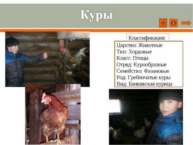 Классификация: Царство: Животные Тип: Хордовые Класс: Птицы Отряд: Курообразн...